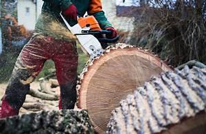 Was Kostet Baum Fällen : baumf llarbeiten sommerfeld gr nanlagen limburg ~ Orissabook.com Haus und Dekorationen