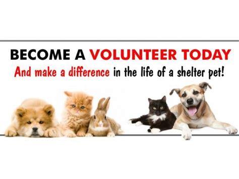 volunteer   stratford animal shelter stratford ct