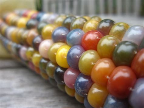 gem glass corn picking the winners from our garden harvest photo contest all you can eat seattle times