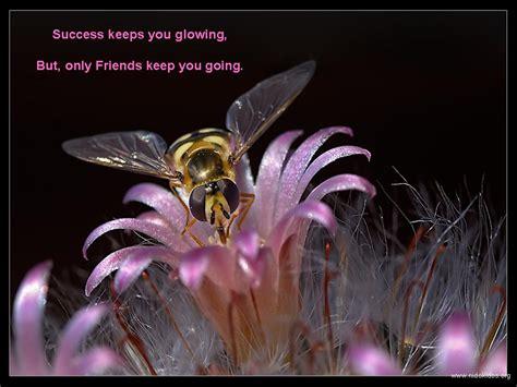 friendship bouquet images   background