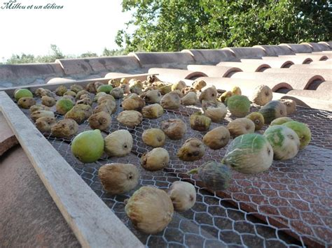 comment cuisiner les figues comment faire sécher les figues millou et un délices