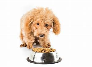 Lack Of Digestive Enzymes In Dogs