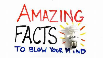 Facts Brain Amazing Mind Blowing Human Fact