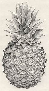 The 19 best images about Pineapple on Pinterest | Artist ...