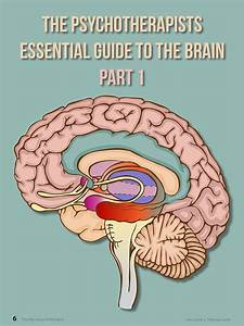 The Psychotherapist U2019s Essential Guide To The Brain  Part 1