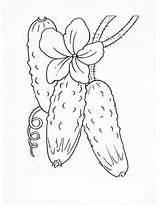 Coloring Cucumber Vegetables Gurke Vegetable Pepino Colorear Castraveti Sheets Vegetais Pepinos Ausmalbilder Gratis Zum Adult Fruits Desene Imprimir Ausmalen Drawing sketch template