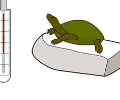 how to keep turtle tank clean 1000 images about turtle care on pinterest aquatic