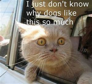 Funny Animal Pi... Funny Pictures