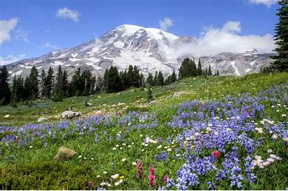 Rainier Mountain Wildflowers Flower Landscape Vacation