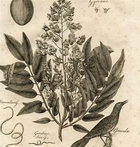 Vintage Botanical Wallpaper
