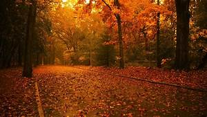 Scenery Pics images Trees in autumn HD wallpaper and ...