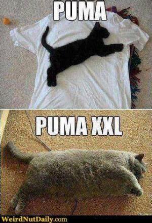 Puma Pants Meme - puma jokes kappit