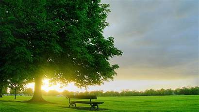Tree Wallpapers Backgrounds Background Trees Did Which