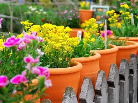tips praktis  menanam bunga hias