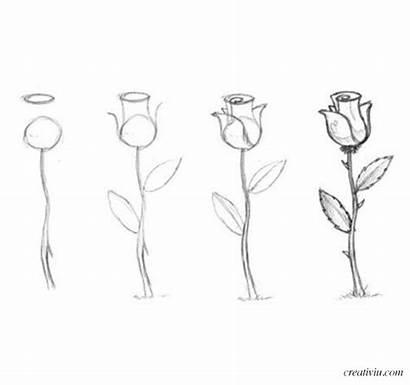 Dibujar Lapiz Dibujos Rosas Como Flores Dibujo