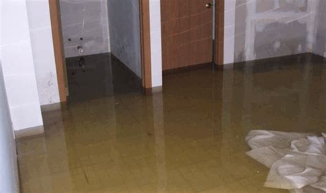 Flooded Basement Cleanup. Typical Items In A Living Room. Living Room Boynton Beach Coupons. Living Room Denver Second Friday. Ikea Living Room On A Budget. Decorating Ideas Living Room With Black Sofas. Living Room European Style. Living Room Set Up Small Room. Queen Anne Style Living Room