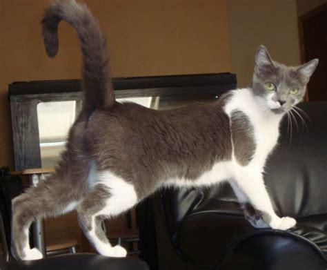 chat qui pisse sur le canape chaton qui fait pipi sur le lit de conception de maison