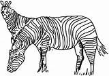 Zebra Coloring Zebras Animals Template Animal sketch template