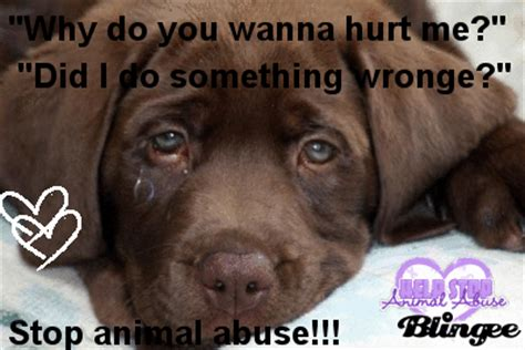 stop animal abuse animated picture codes