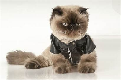 Wearing Clothes Cats Cat Mtv National Kittens