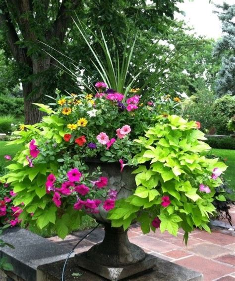 planting urns ideas best 25 urn planters ideas on pinterest hanging basket garden metal containers and topiary