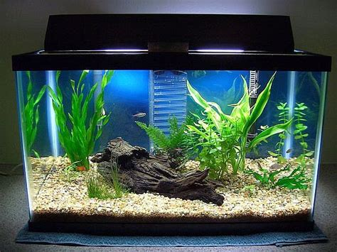 Ideas For Fish Tank by Clean Fish Tank