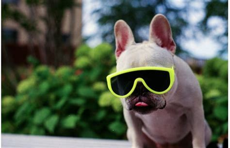 funny animals wearing glasses photo gallery  monk