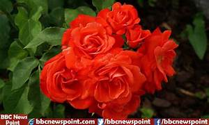 Top 10 Most Beautiful Flowers In The World 2017