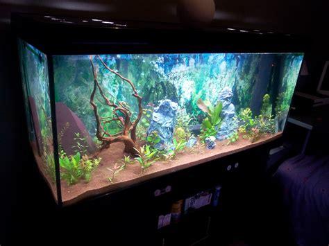 population de poissons pour un aquarium de 525 litres
