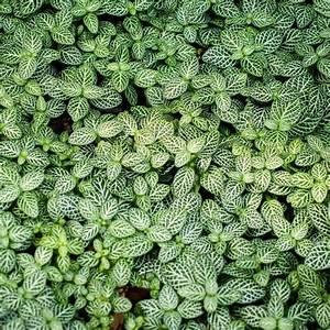 Grande Plante Verte : plante verte d 39 int rieur liste ooreka ~ Premium-room.com Idées de Décoration