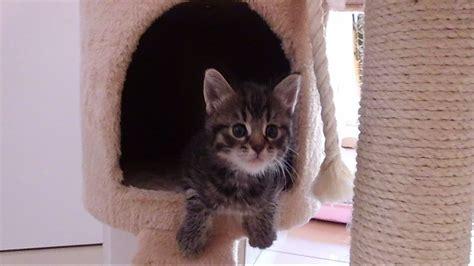drei kleine suesse katzen  wochen alt babykatzen youtube