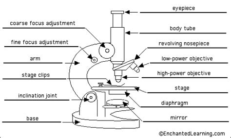 Light Sheet Microscope by The Microscope General Revision For Gcse