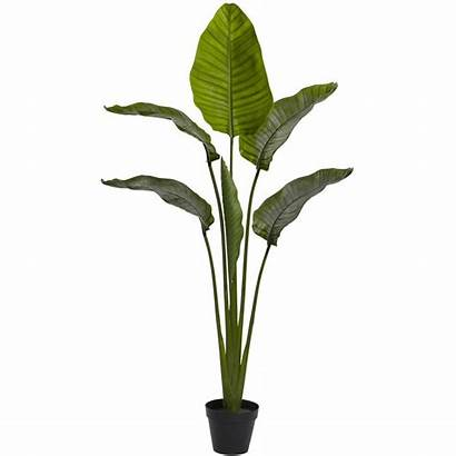 Palm Indoor Tree Outdoor Natural Travelers Nearly
