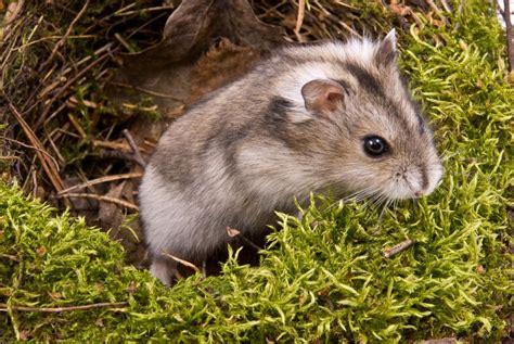Wie Reinige Ich Meinen Hamsterkäfig Richtig? » Tierheilkunde
