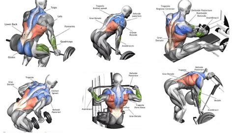 As the name of the muscle implies, the primary function of the levator scapulae is to raise the scapula, the shoulder bone. Back Workout Complete With 8 Exercises | Fitness Workouts ...