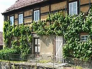 Pergola Mit Wein Bepflanzen : weinstock erziehen gro e bersicht zum stockaufbau ~ Eleganceandgraceweddings.com Haus und Dekorationen