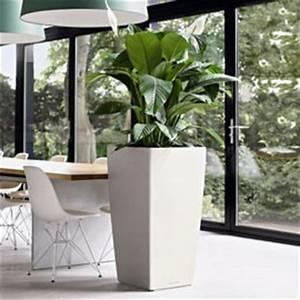 Pot De Fleur Interieur Design : location de plantes ~ Premium-room.com Idées de Décoration