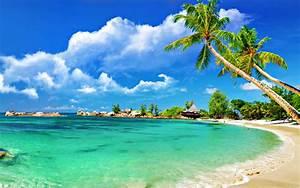 Palm trees on sandy beach wallpaper - 1076658