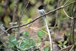 KARNALA BIRD SANCTUARY Photos, Images and Wallpapers ...