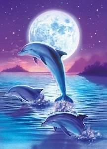 Schöne Delfin Bilder : 132 besten tiere delfine bilder auf pinterest delphine meerestiere und wassertiere ~ Frokenaadalensverden.com Haus und Dekorationen