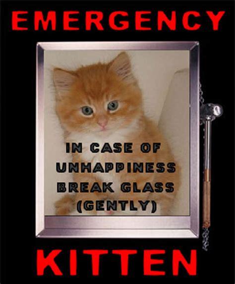 Good Luck Cat Meme - good luck cat meme www pixshark com images galleries with a bite