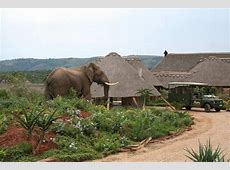 Pumba Private Game Reserve, Grahamstown, South Africa