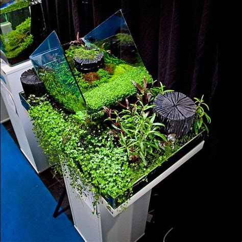 Oliver Knott Aquascaping by Quot Inside Outside Quot By Oliver Knott Planted Aquarium