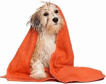 Dog Grooming Pet Bath Pets Dubai Boarding