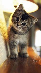Cute Cat Wallpaper iPhone | Cute Cat Wallpapers | Cute ...