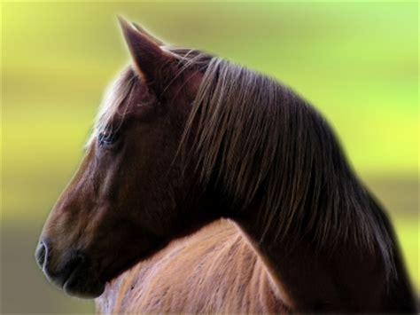 Horse Humane Society