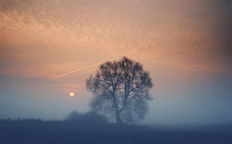 foggy sunset tree field wallpapers foggy sunset tree