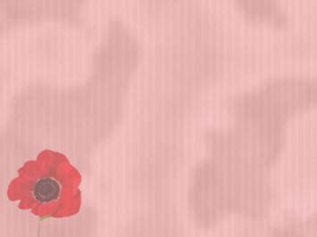 poppy  powerpoint template