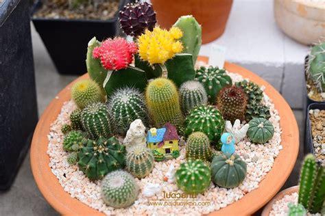 Cactus Library ร้านขายเคคตัสสุดคูลพร้อมคาเฟ่น่านั่ง - ไป ...