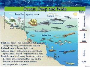 Food Web Diagram Ocean Floor Autotroph And Heterotroph ...